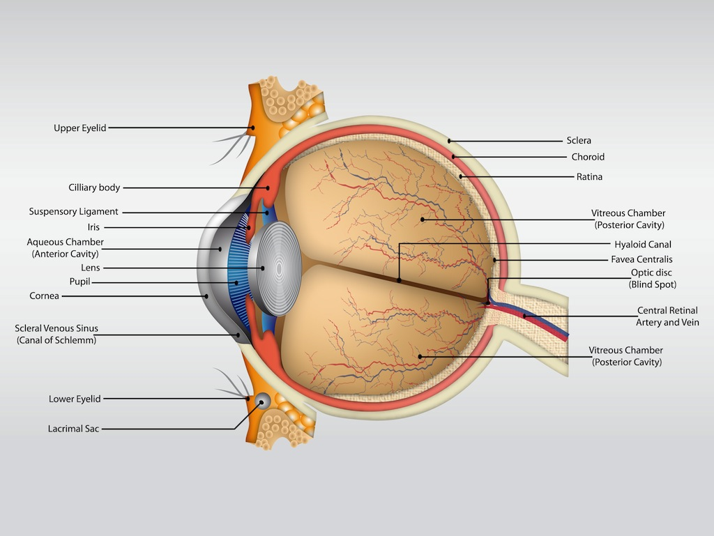 how to get rid of eye floaters and flashes